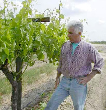 Joe Soghomonian looking over his grape vineyard photo