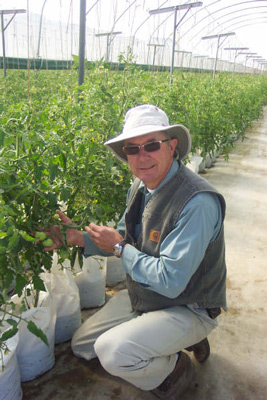 Hans Wilgenburg with his hand-picked tomatoes